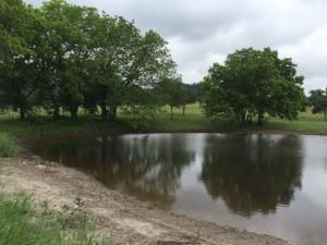 5-19-2015 Pond