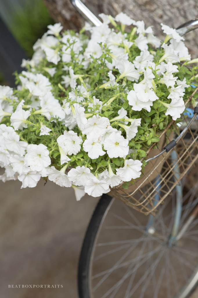 Pretty flowers displayed in the basket of a bicycle