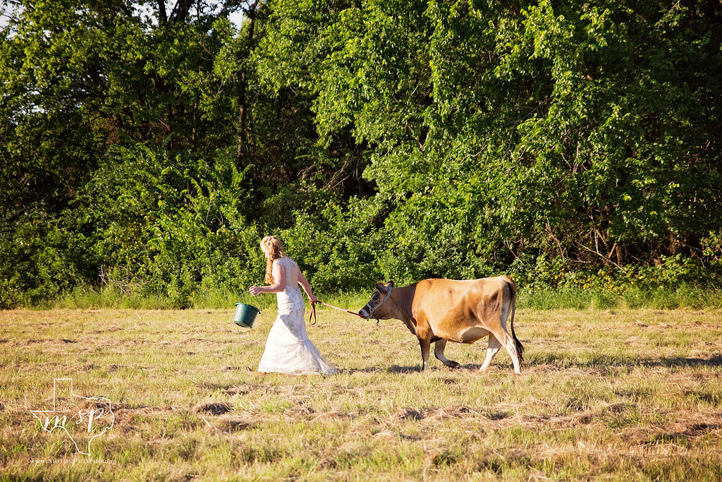The bride and her pet cow Mocha enjoyed a stroll around Hollow Hill in Weatherford, TX
