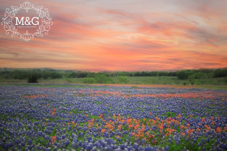 Texas bluebonnet wildflowers on your wedding day bluebonnets and indian paintbrushes mightylinksfo